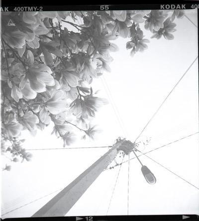 la_arbre_fleurs