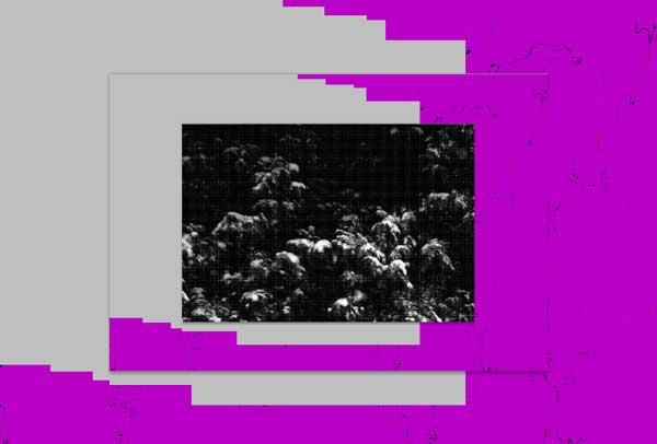 la_purple