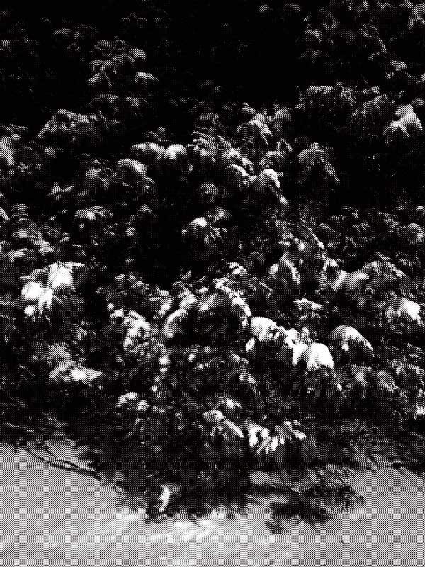 la_snow